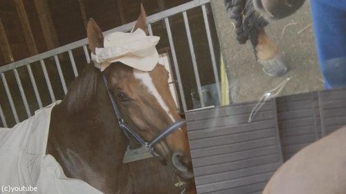イギリスでは馬も紳士04