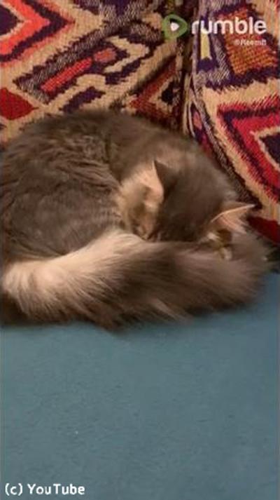 アレを抱き枕にする猫01