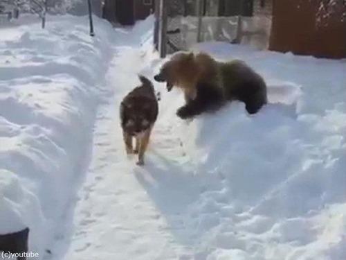 クマ「がおークマだぞぉー!」 犬「知ったこっちゃねー」04
