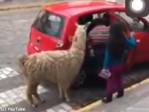 ペルーの日常風景00