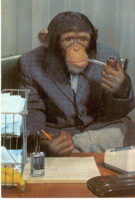 チンパンジー02