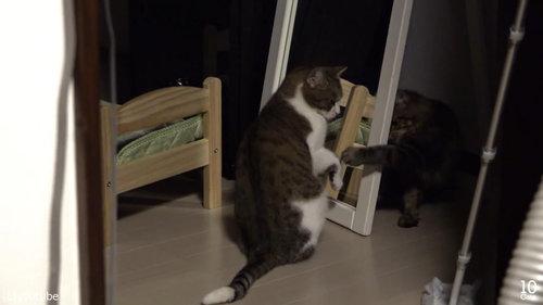 猫10匹と大きな鏡05