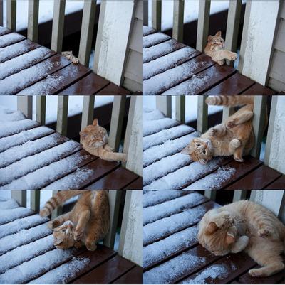 猫の受難07