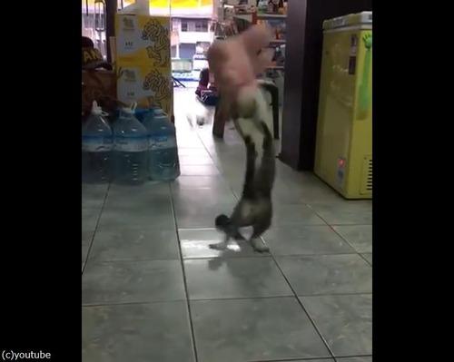 ぬいぐるみVS猫02