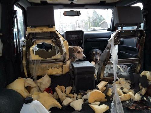 「犬2匹が車の中ではしゃぎ過ぎ」01