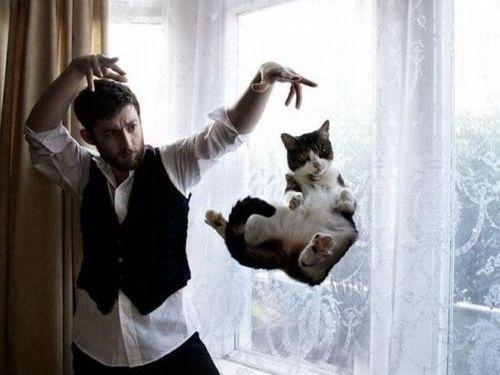 猫の日まとめ11