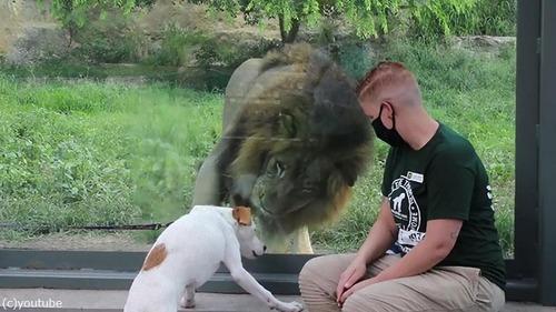 犬や猫が動物園を訪れる01