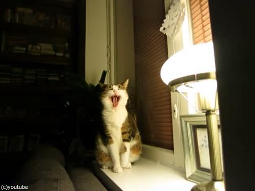 猫のストレッチをいろんな角度から眺めてみた01