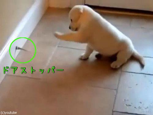 子犬とドアストッパー00