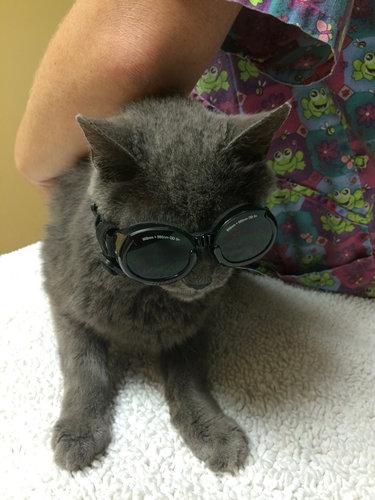 07メガネやサングラスをかける動物たち