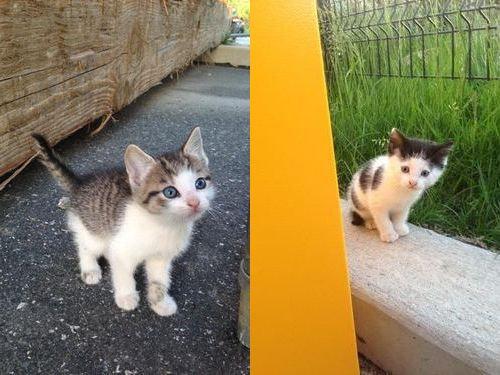 野良猫が子猫04