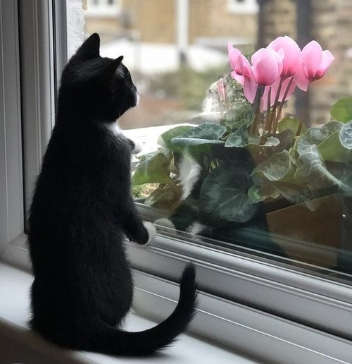 猫の屋内飼育01