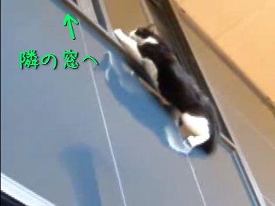 無茶な移動をする猫