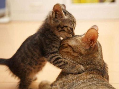 動物たちのキス00