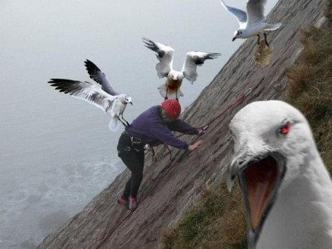 恐怖の鳥02