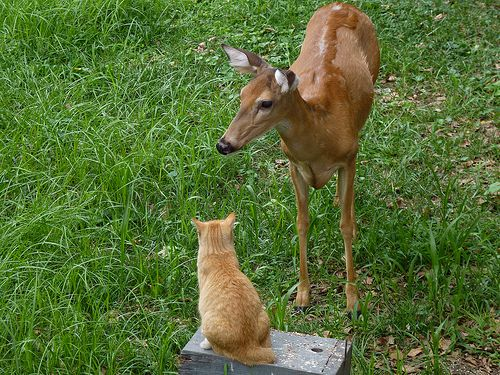 鹿と猫06