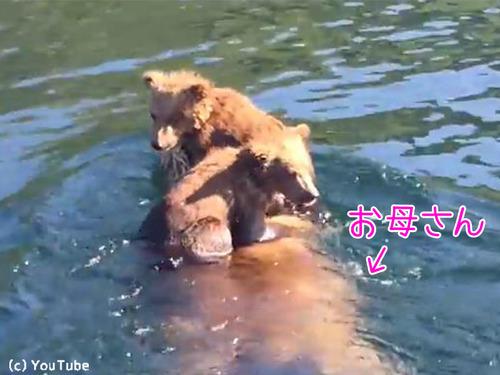 熊ママの泳ぎが想像以上にすごい00