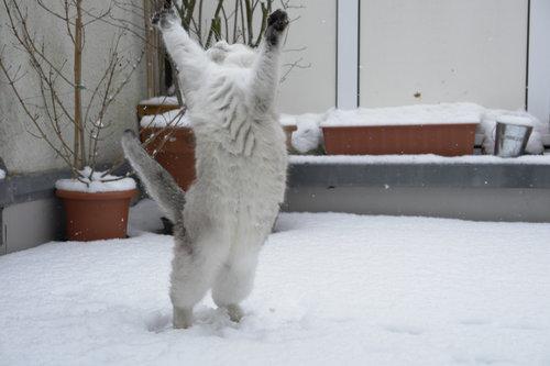雪なんてへっちゃらな猫04