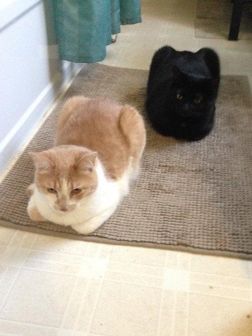猫の「香箱座り」をパンの塊という理由10