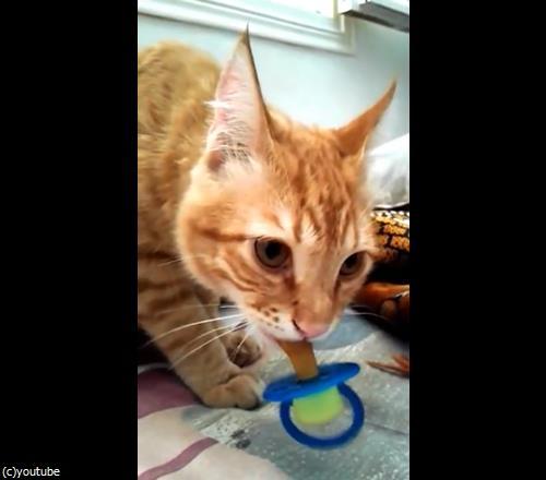猫におしゃぶり01