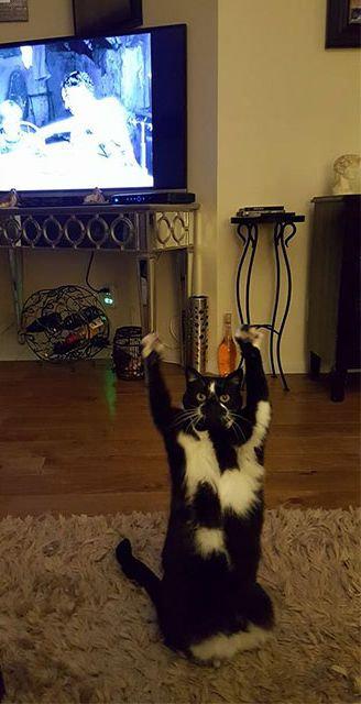 ばんざい猫08
