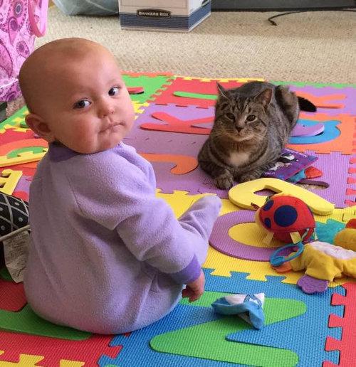 妊娠中に拾った猫が、今は赤ちゃんと親友に07