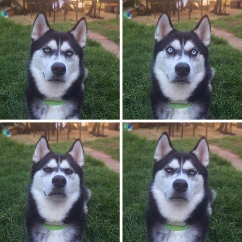 犬にボールを投げるふりを01