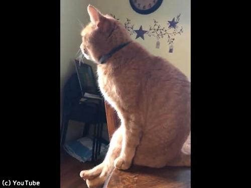 猫がテーブルに座る瞬間00