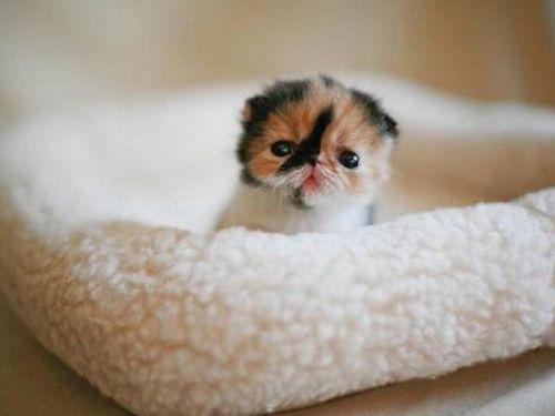 ぶさかわいい猫00