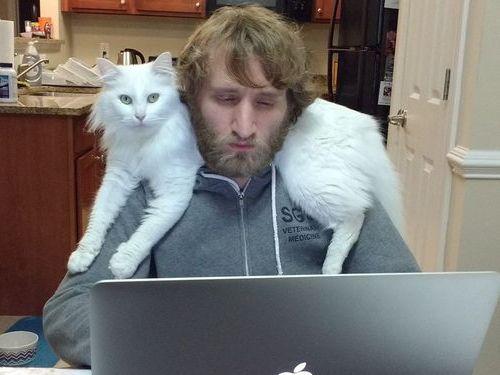 猫はパソコンに乗りたがる02