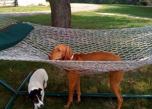 犬や猫の家具の使い方09