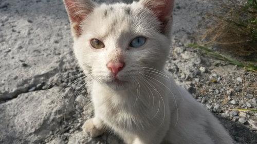 かわいそうな子猫を見つけた04