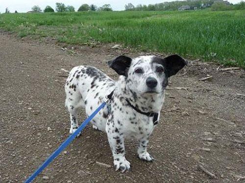犬の混血B02