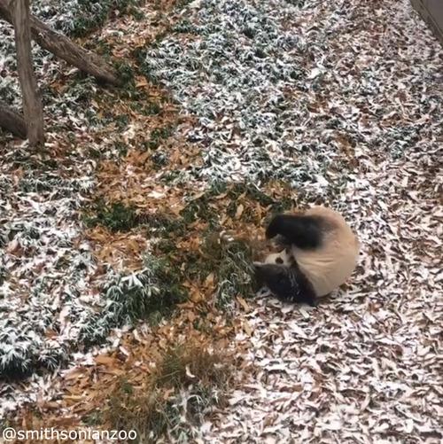 雪遊びパンダ02
