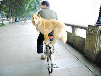 自転車やバイクに乗る犬たち12