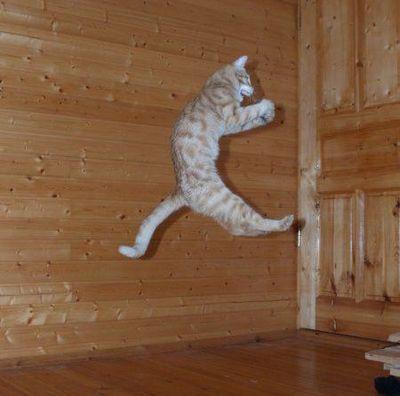 猫ジャンプ15