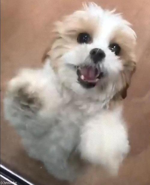 子犬がデイケア03