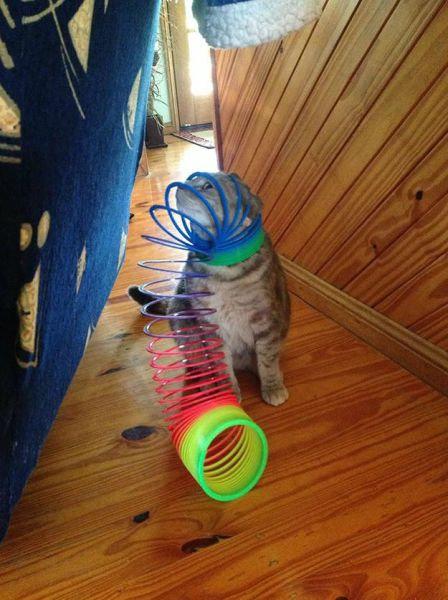 猫の謎の行動03