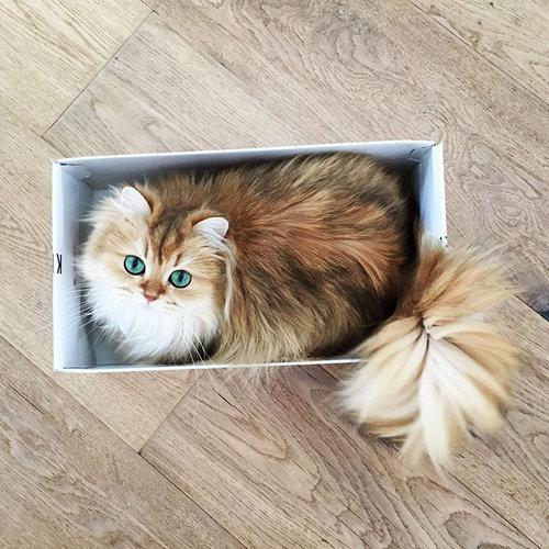 写真写りの良い猫05