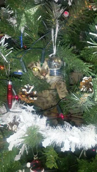 クリスマスとペット08