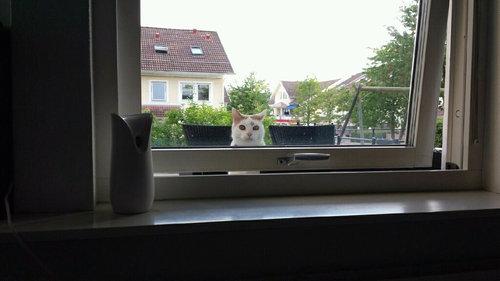 近所の猫の不満01