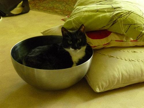 猫ベッド16