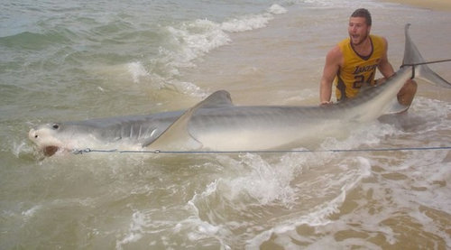 ワイルドすぎる…素手でサメを捕まえる男03
