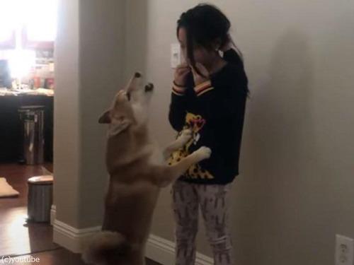 ハーモニカを吹く少女に…犬が遠吠え