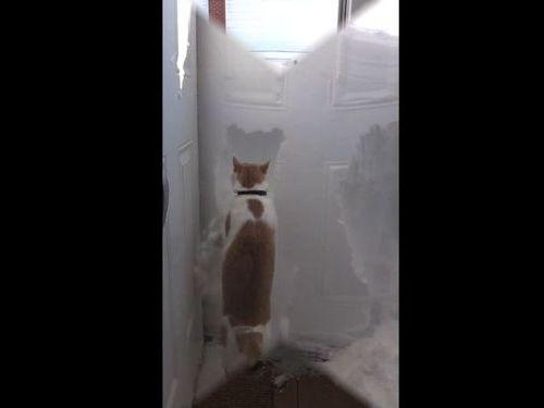 玄関の雪と猫01