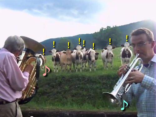 ジャズを愛する牛たち