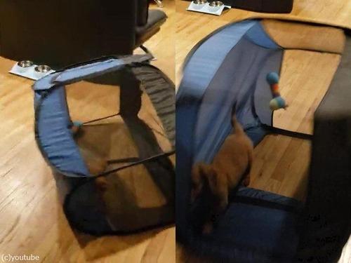 犬用テントの想定外の遊び方02