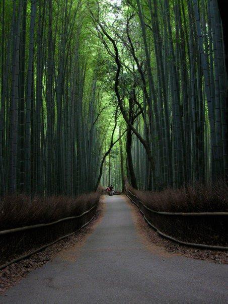 京都の竹林02