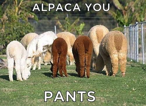アルパカ荷造り02