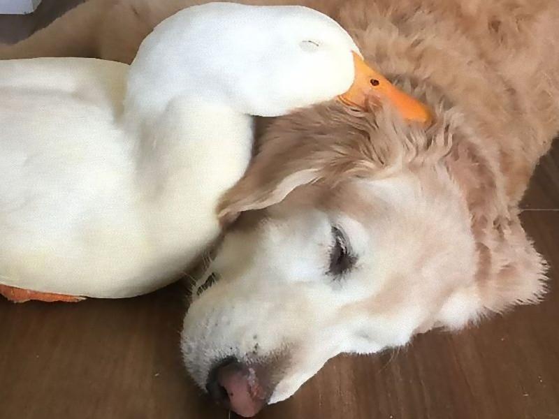 犬とアヒル